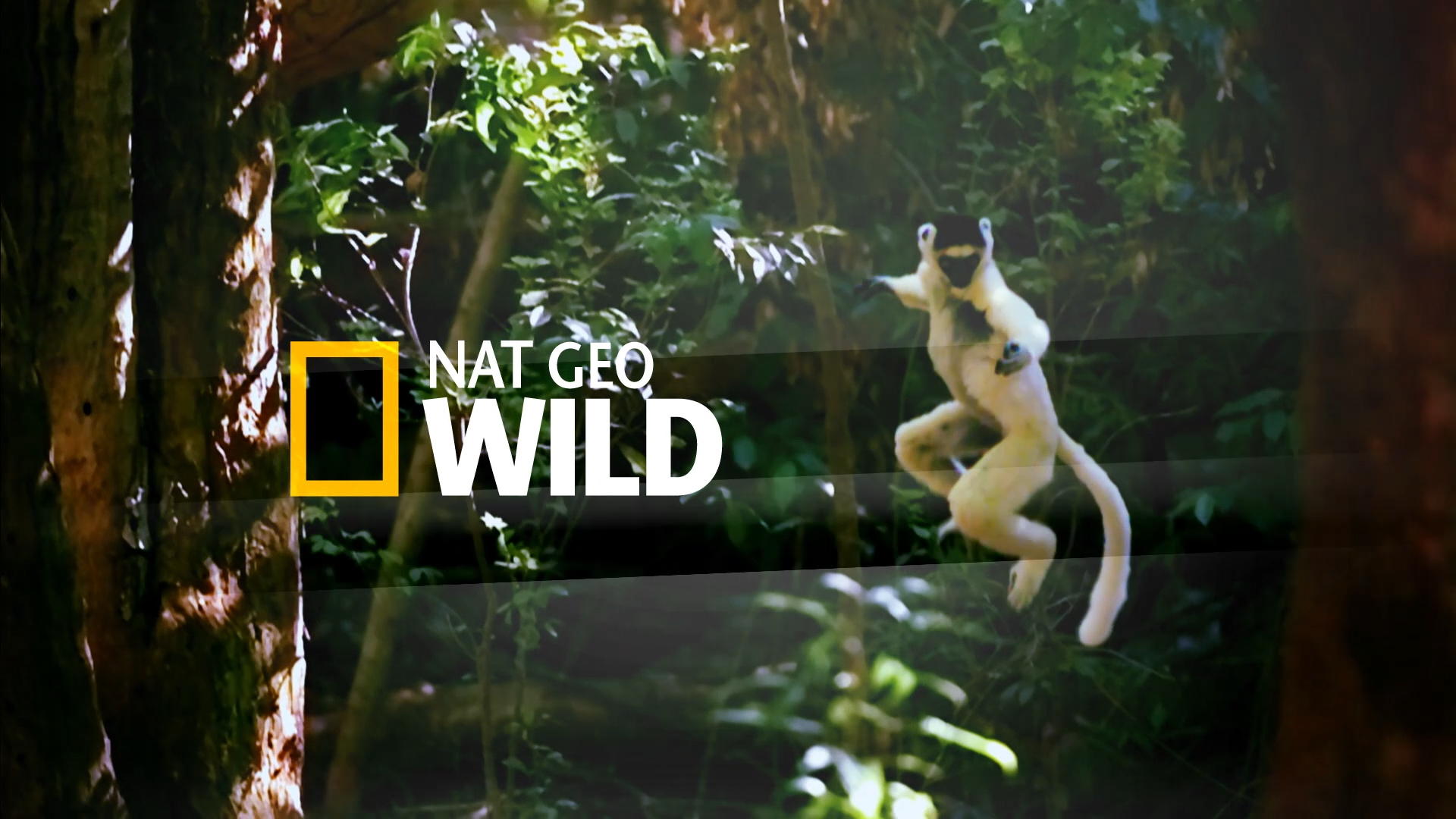 National Geographic Destination Wild