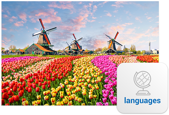A field of colourful tulips, like the colourful Dutch speaking voice actors you can hire on Voices.com.