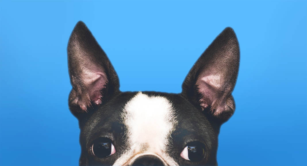 Banner image showing dog listening