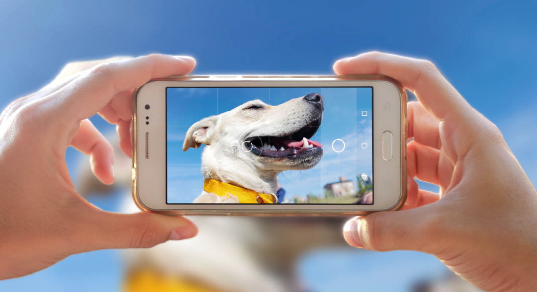 A phone held up with a photo of a dog on it