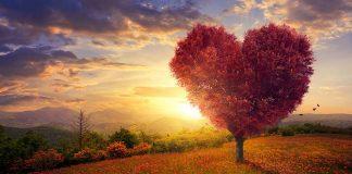 Heart shaped tree, sunset