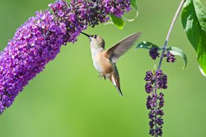 humming bird feeling | Voices.com Blog - Where clients and voice actors can find valuable information on pre-production, technology, animation, video and audio production, home recording studios, business growth, voice acting and auditions, celebrity voice actors, voiceover industry news and more!